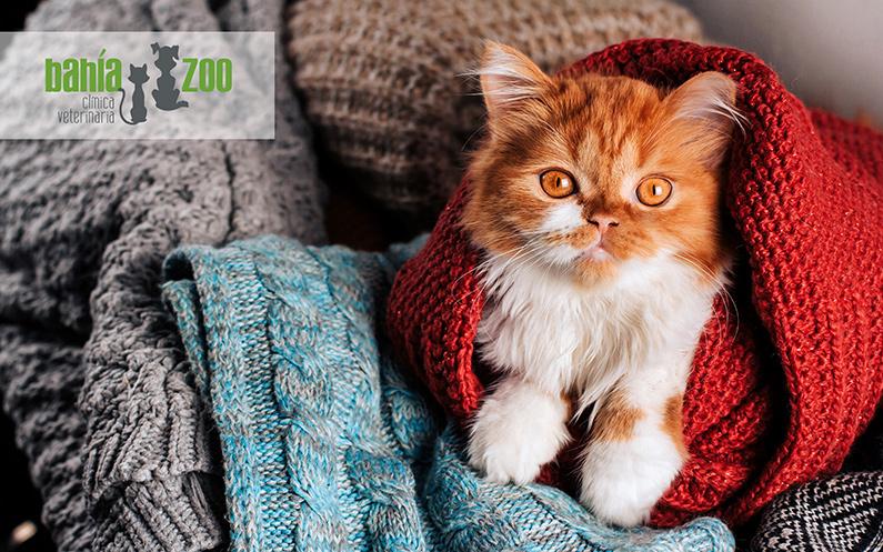 6 cuidados clave para tu gato en invierno