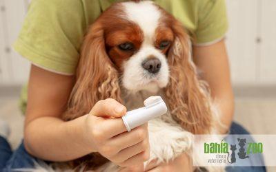Salud dental en perros y gatos: ¿por qué es tan importante para su salud?
