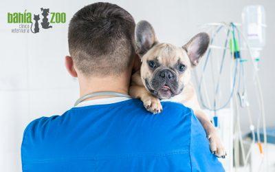 Principales vacunas debes poner a tu perro para que esté protegido