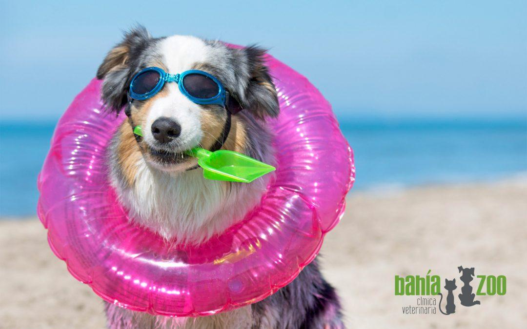 Qué saber para irte de vacaciones con tu mascota